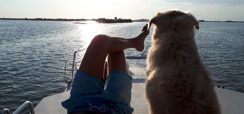 Animals on board dog voyage houseboat navigation