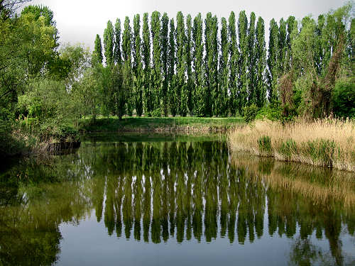 Alzaie del Sile a Treviso natura alberi