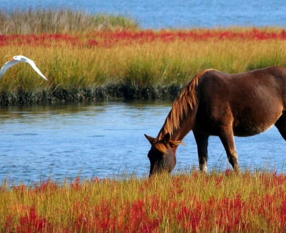Delta del Po a cavallo