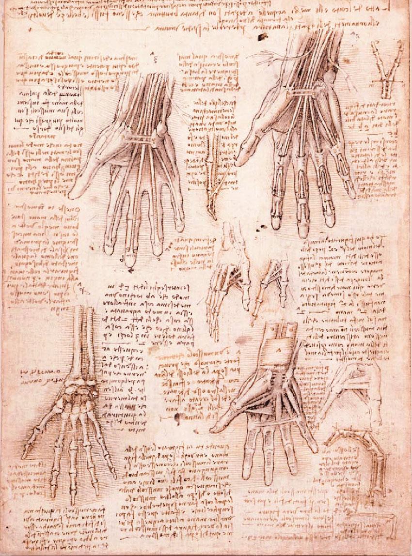Authentic human bodies Leonardo Da Vinci Le ossa i muscoli e i tendini della mano