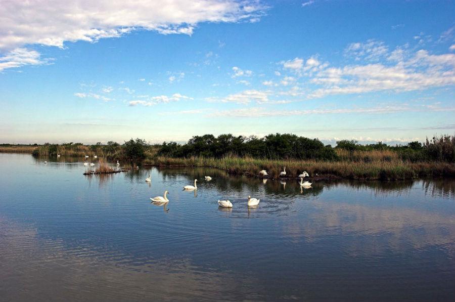 Riserva Naturale della Valle Canal Novo